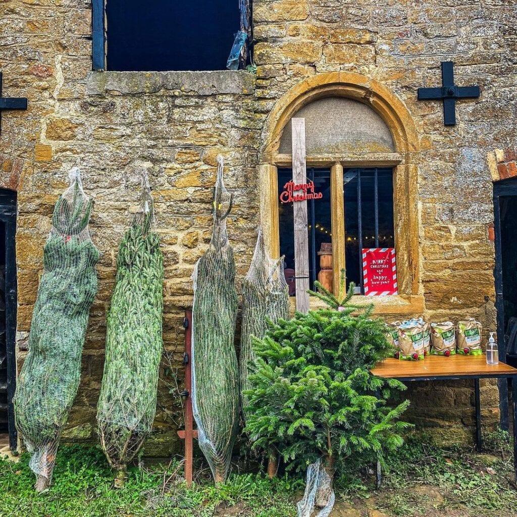 Castle Farm Christmas Trees - Somerset